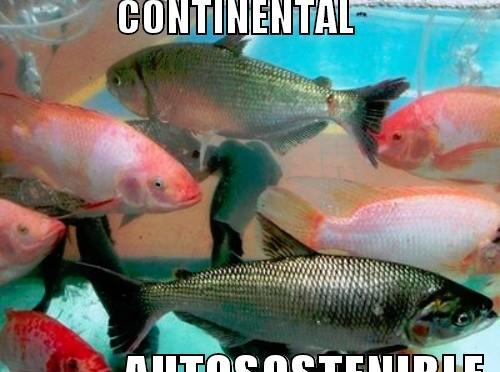 Mojarra roja anunsis for Proyecto de piscicultura mojarra roja